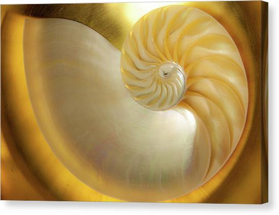 Golden_nautilus_0692 Canvas Print