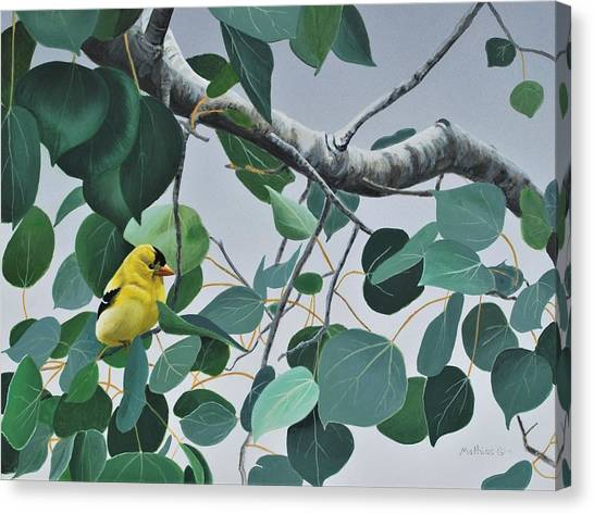 Goldfinch And Aspen Canvas Print