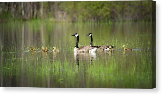 Goose Family #5 Canvas Print