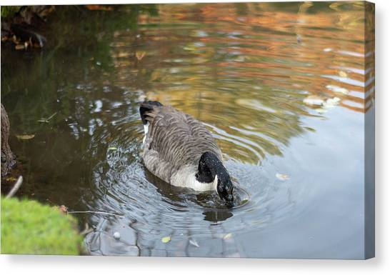 Canvas Print featuring the photograph Goose Head In Water by Scott Lyons