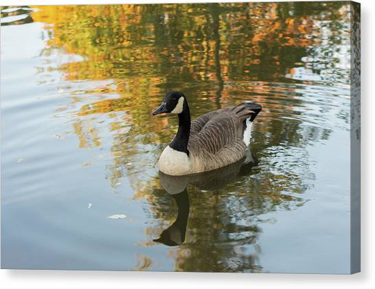 Canvas Print featuring the photograph Goose Reflecting In Water by Scott Lyons