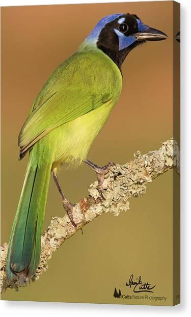 Gorgeous Green Jay Canvas Print
