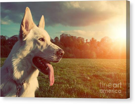 Happiness Canvas Print - Gorgeous Large White Dog In A Park by Abo Photography