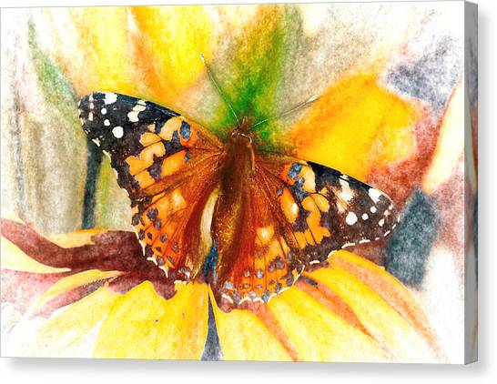 Gorgeous Painted Lady Butterfly Canvas Print