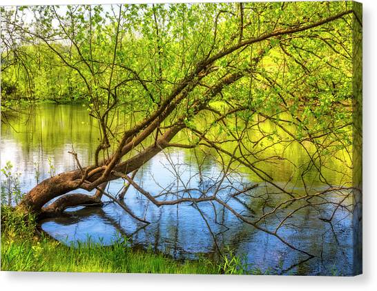 Canvas Print - Graceful Spring by Debra and Dave Vanderlaan