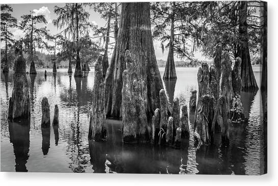 Atchafalaya Basin Canvas Print - Grand Lake Cypress by Andy Crawford