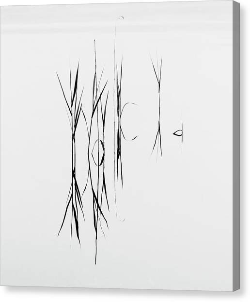 Blade Of Grass Canvas Print - Grass Reflected In Lake by Bengtsson, Hasse