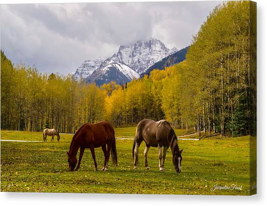 Grazing In Aspen Canvas Print