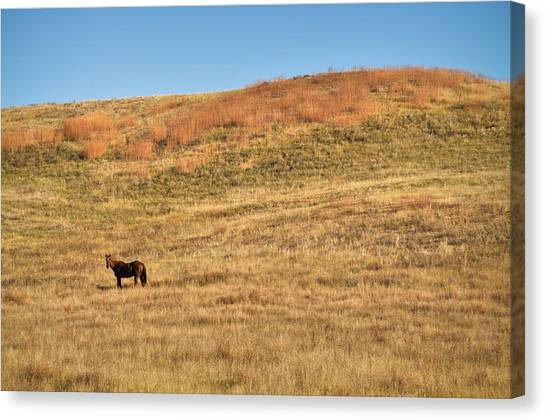 Grazing In The Grass Canvas Print