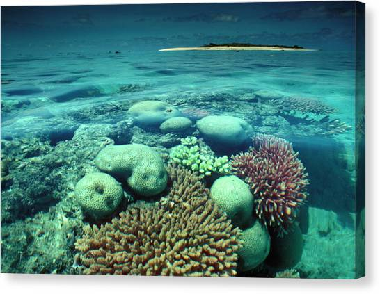 Great Barrier Reef In The Foreground Canvas Print by Auscape / Uig