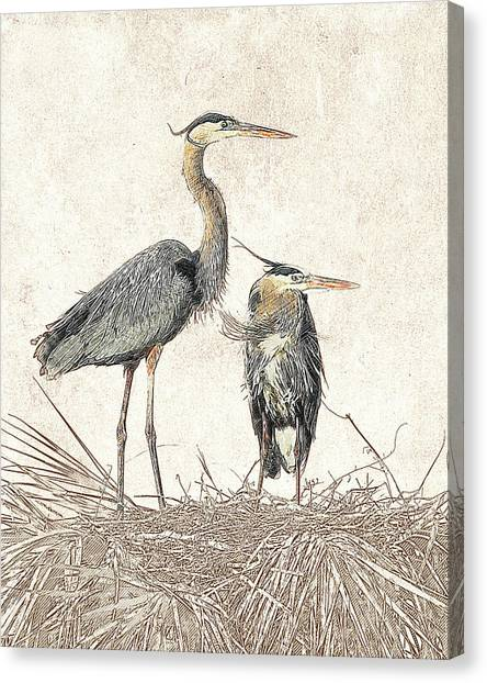 Canvas Print featuring the photograph Great Blue Heron Couple - Photographic Drawing by Dawn Currie