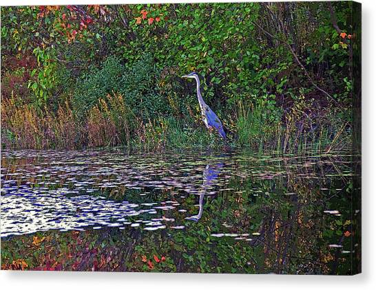 Great Blue Heron In Autumn Canvas Print