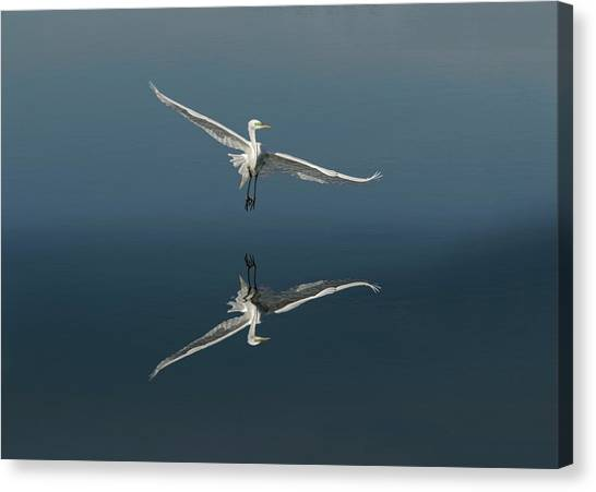 Great Egret Flying With Reflection Canvas Print by Adam Jones
