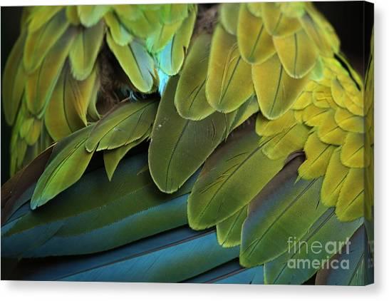 Macaw Canvas Print - Great Green Macaw Ara Ambiguus, Also by Vladimir Wrangel