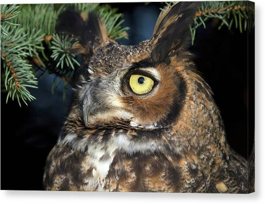 Great Horned Owl 10181801 Canvas Print