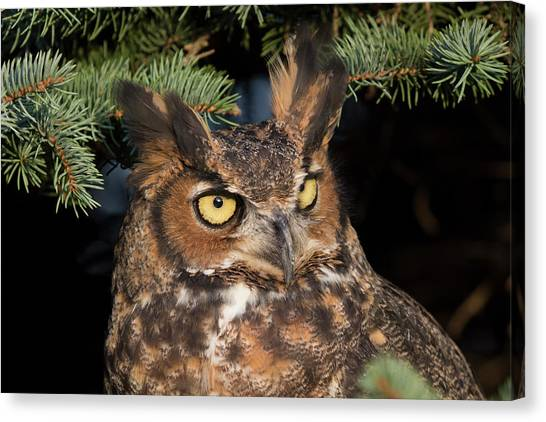 Great Horned Owl 10181802 Canvas Print