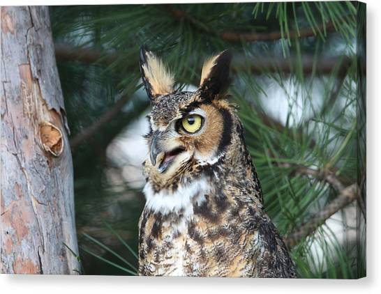 Great Horned Owl 5151801 Canvas Print