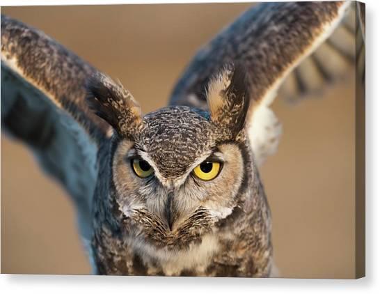 Great-horned Owl Bubo Virginianus Canvas Print