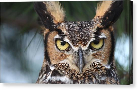 Great Horned Owl Eyes 51518 Canvas Print