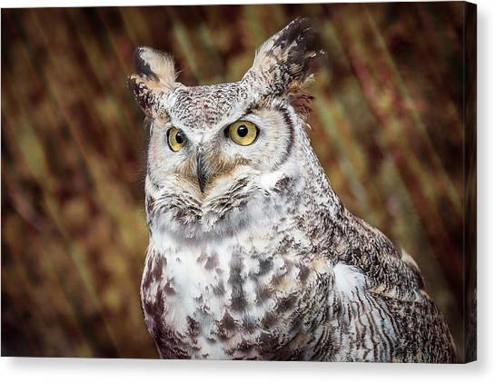 Canvas Print featuring the photograph Great Horned Owl Portrait by Patti Deters
