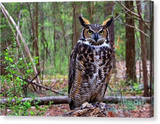 Great Horned Owl Standing On A Tree Log Canvas Print