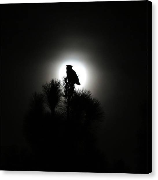 Great Horned Owl With Winter Moon Canvas Print by Robin Street-Morris