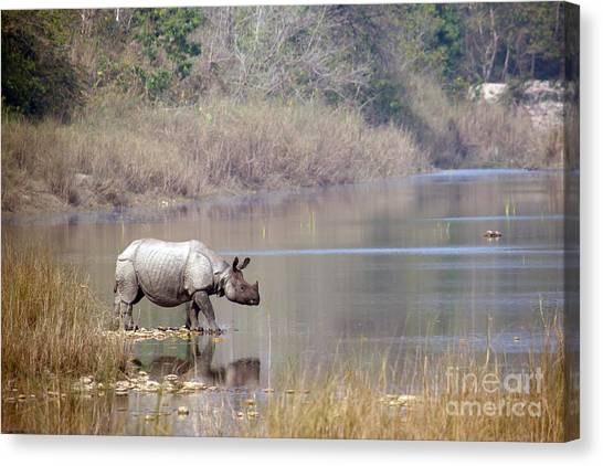 No-one Canvas Print - Greater One-horned Rhinoceros Specie by Paco Como