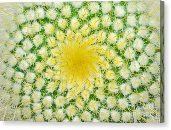 Bush Canvas Print - Green Cactus And Yellow Prickles by Ruslan Grechka