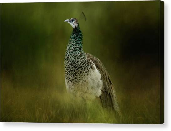 Green Gem In The Meadow  Canvas Print