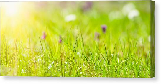 Blade Of Grass Canvas Print - Green Grass Leaf In The Middle Of Nature by Franckreporter