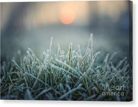 Hoarfrost Canvas Print - Green Grass With Morning Frost And Red by Chromakey