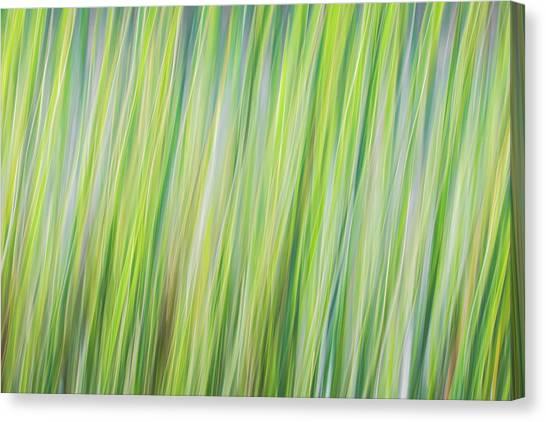 Green Grasses Canvas Print