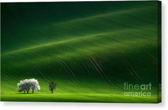 Green Rolling Spring Landscape With Canvas Print by Vlad Sokolovsky