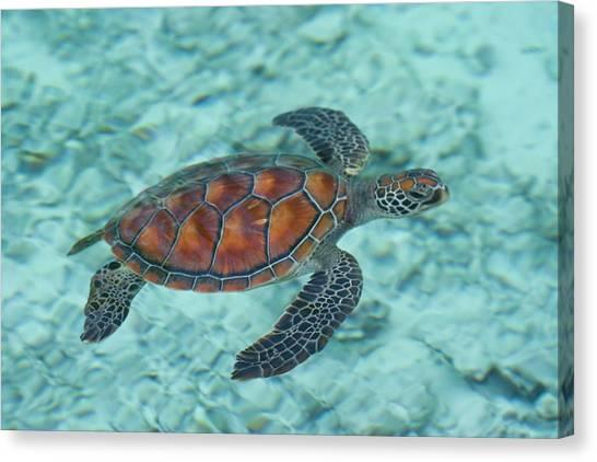 Green Sea Turtle Canvas Print by Mako Photo