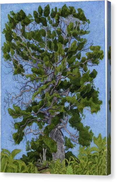 Canvas Print - Green Tree, Hot Day by Alice Ann Barnes