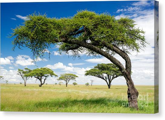 Southern Africa Canvas Print - Green Trees In Africa, After The Rainy by Shuttjd