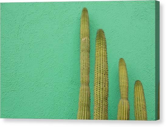 Green Wall And Cactus Canvas Print