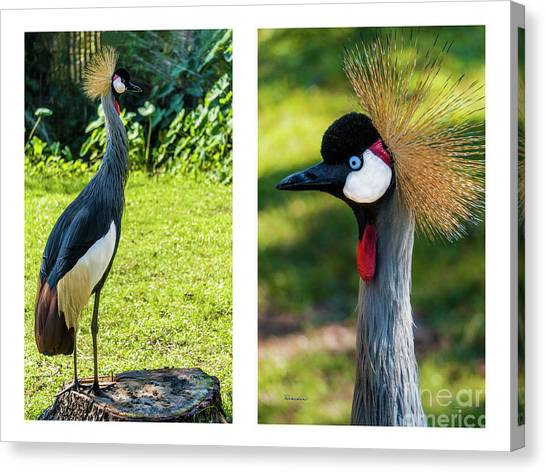 Grey Crowned Crane Gulf Shores Al Collage 10 Diptych Canvas Print