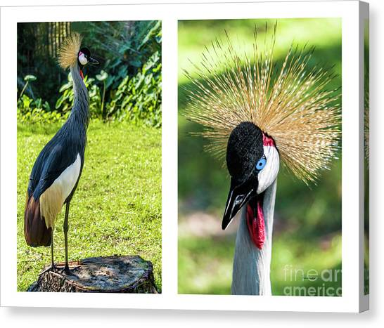 Grey Crowned Crane Gulf Shores Al Collage 8 Diptych Canvas Print