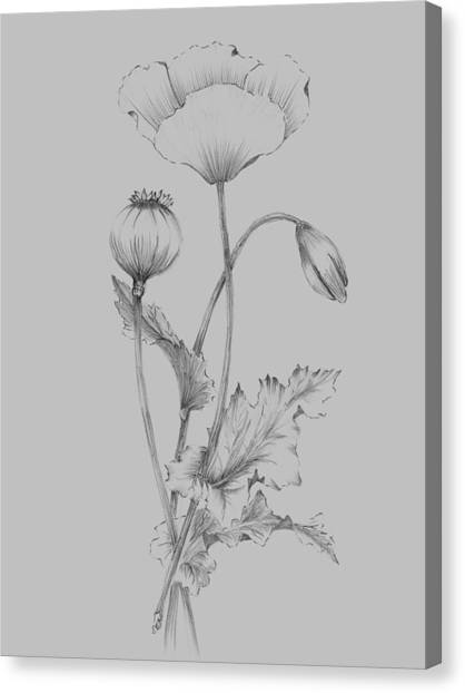 Dahlias Canvas Print - Grey Flower Sketch 3 by Naxart Studio
