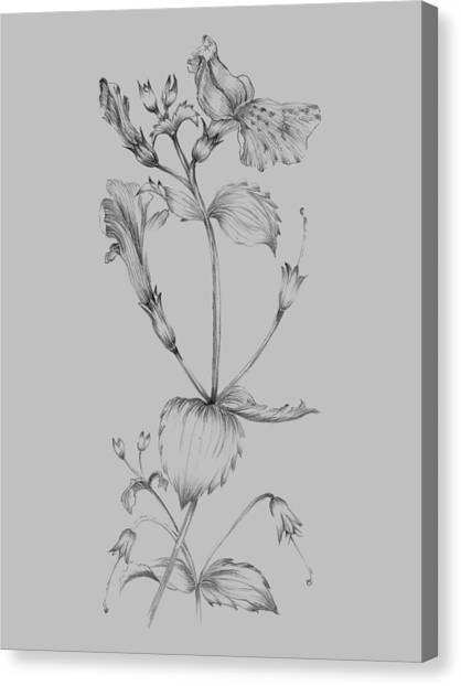 Dahlias Canvas Print - Grey Flower Sketch I by Naxart Studio
