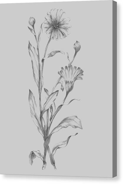 Dahlias Canvas Print - Grey Flower Sketch Illustration 3 by Naxart Studio