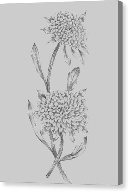 Dahlias Canvas Print - Grey Flower Sketch Illustration II by Naxart Studio