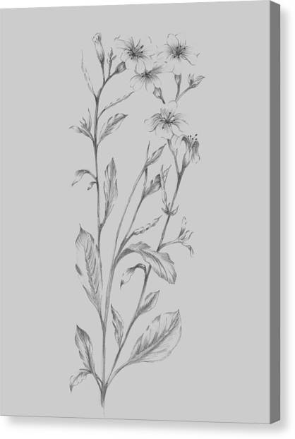 Dahlias Canvas Print - Grey Flower Sketch Illustration by Naxart Studio
