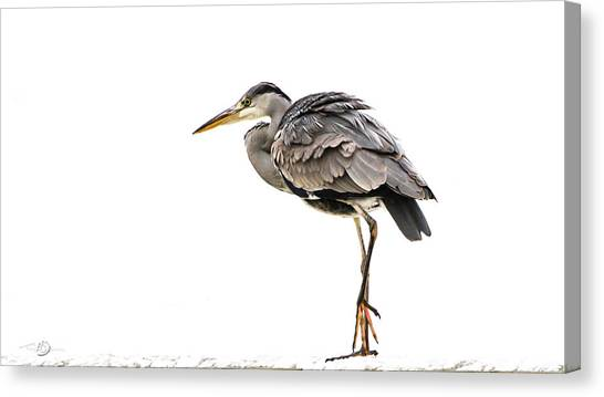 Grey Heron On Snow Canvas Print