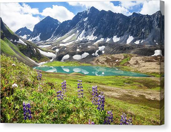 Grizzly Bear Lake Canvas Print