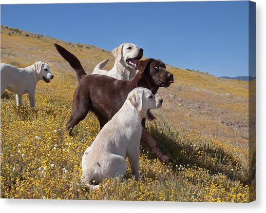 Yellow Labrador Retriever Canvas Prints (Page #4 of 30) | Fine Art