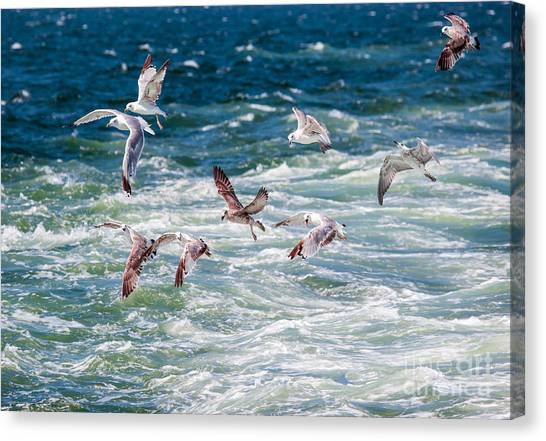 Sea Life Canvas Print - Group Of Seagulls Over Sea by Muratart