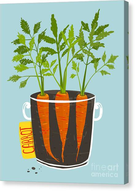Ingredient Canvas Print - Growing Carrots With Green Leafy Top In by Popmarleo