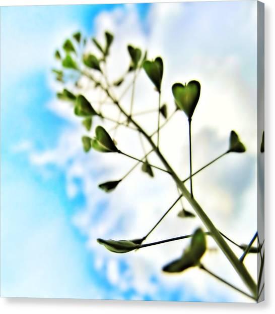 Growing Love Canvas Print